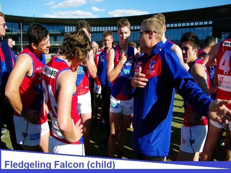 Junior Falcon Child - Youth
